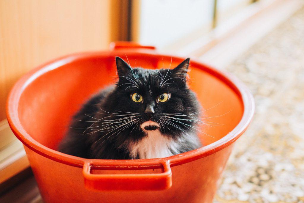 バケツの中にいる猫
