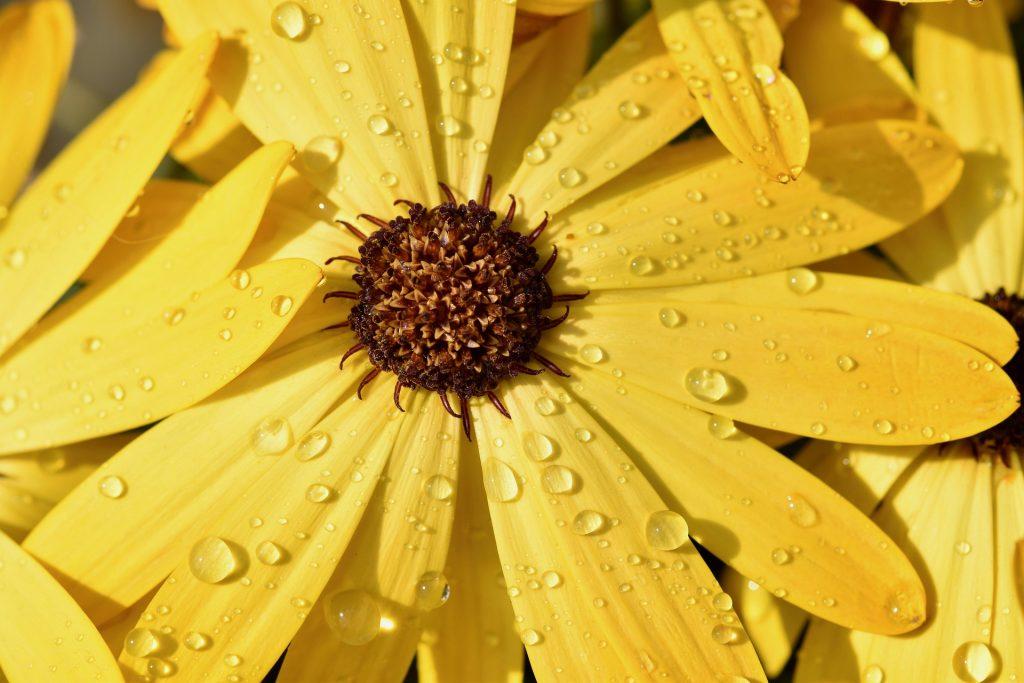 春雨では春の花に雨の雫がしたたっている様子