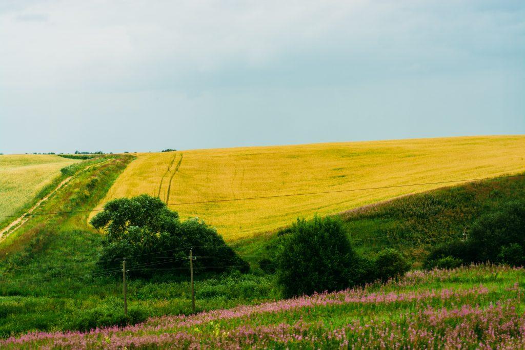 恵みの雨の影響を受けた田舎の畑