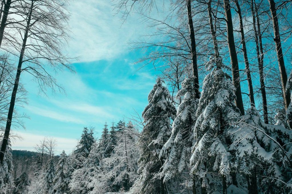 ところどころ雪が降っている様子