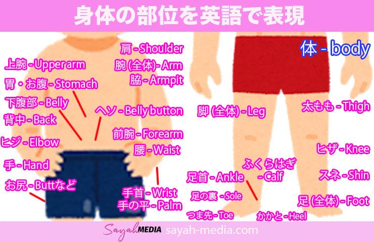 身体の部位を英語で表現した画像
