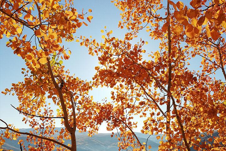秋の時雨の写真