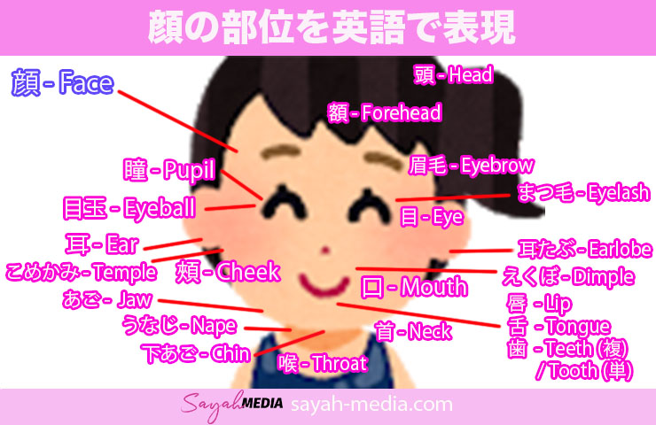 顔の部位を英語で表現した画像