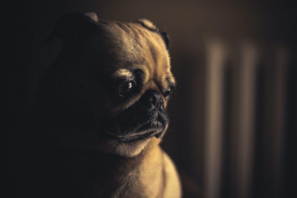 失敗をして反省している犬