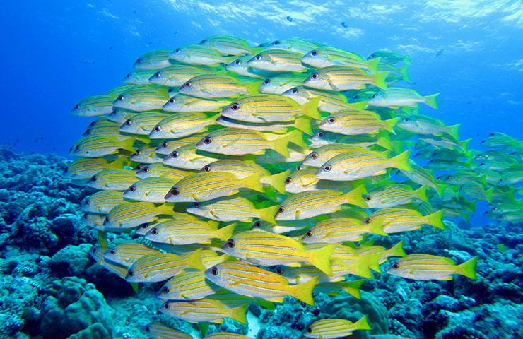 パラオの海で泳ぐ魚たち