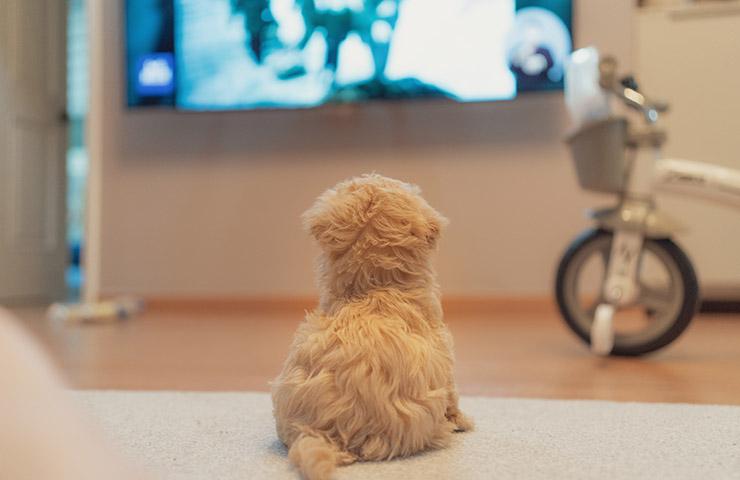 犬がテレビを観ている様子