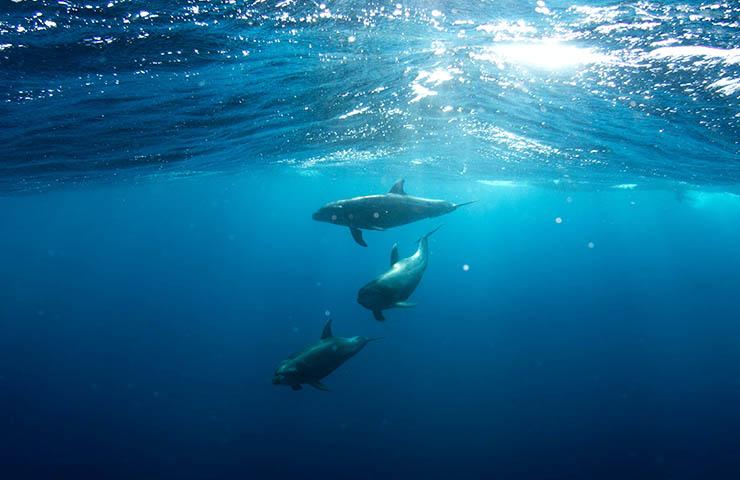 海で泳いでいるイルカたち